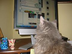 catcomputer